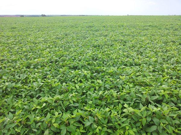 Plantação de soja próxima a São Félix do Araguaia, no Mato Grosso. Foto: Daniel Santini